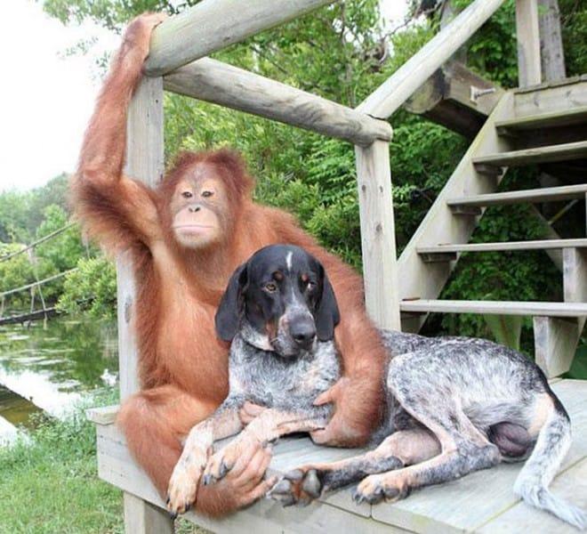 Amitié improbable entre les animaux - 9