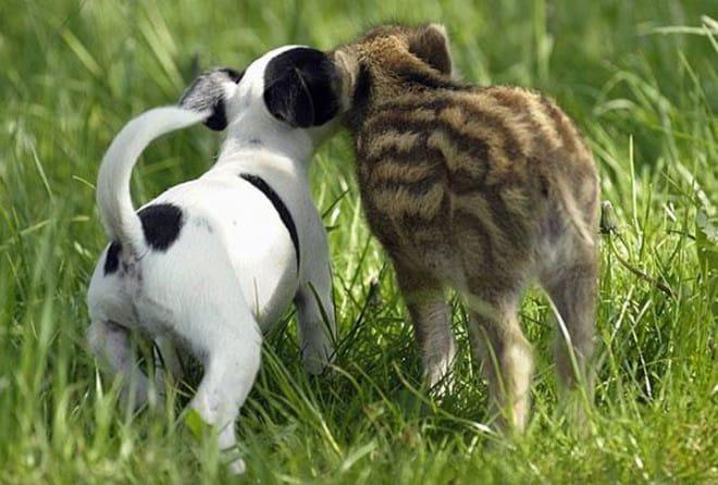 Amitié improbable entre les animaux - 11