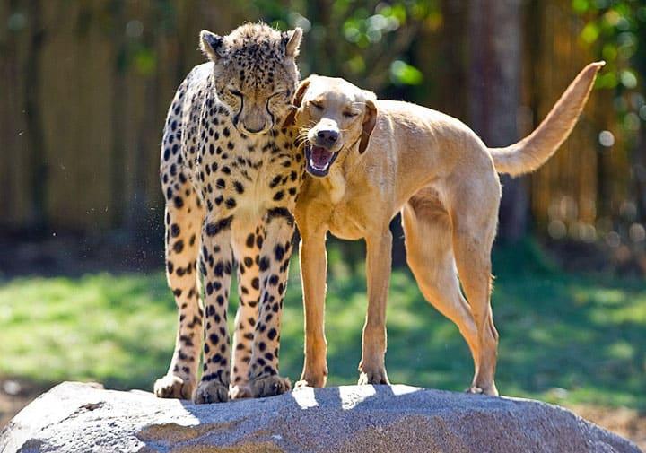 Des amitiés improbables entre différentes espèces animales
