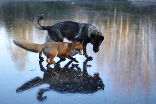 Amitié improbable entre les animaux - 28