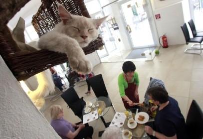 Le succès des bars à chat au Japon