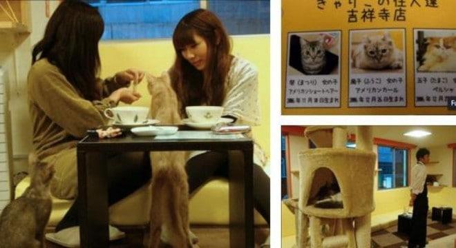 Bars à chat au Japon - 4