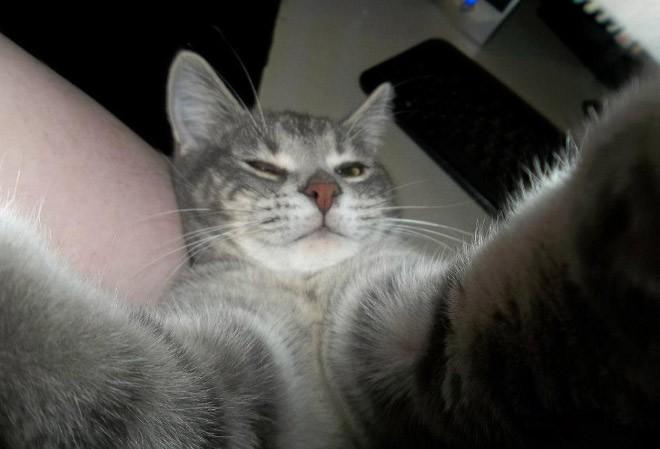 Selfie de chats – 9