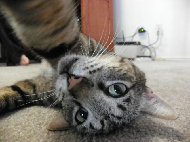 Selfie de chats – 10
