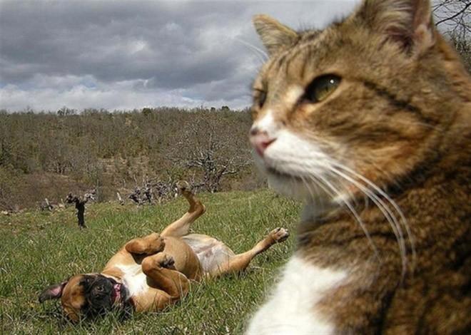 Selfie de chats - 14