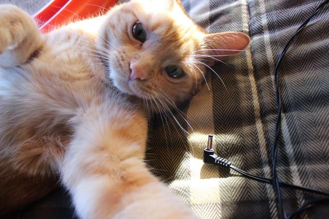 Selfie de chats – 15