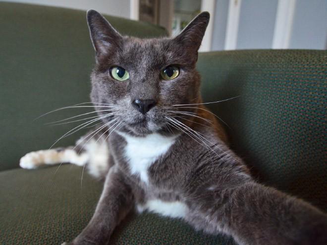 Selfie de chats – 17