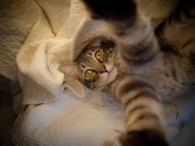 Selfie de chats – 18