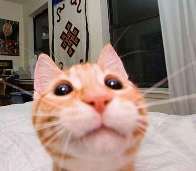 Selfie de chats – 19