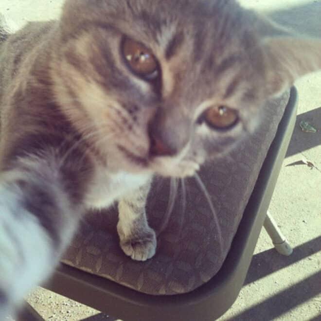Selfie de chats – 3