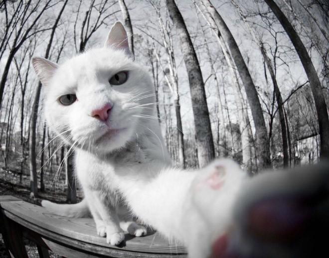 Selfie de chats – 7
