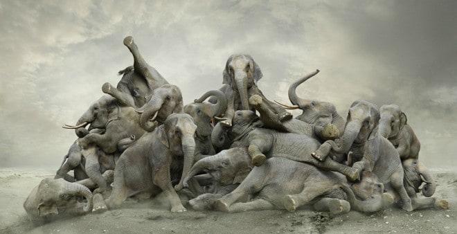 Eléphants – photographe Koen Demuynck