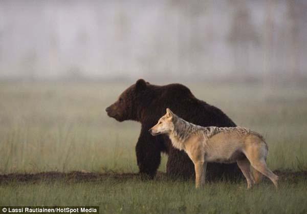 Histoire d'amour entre un ours et un loup – 4