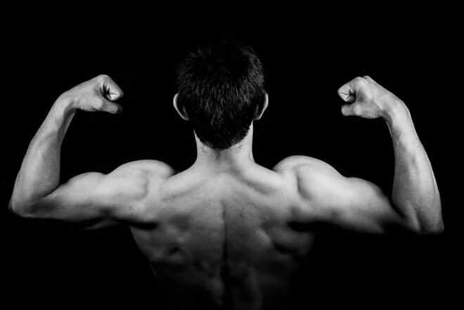 muscles torse